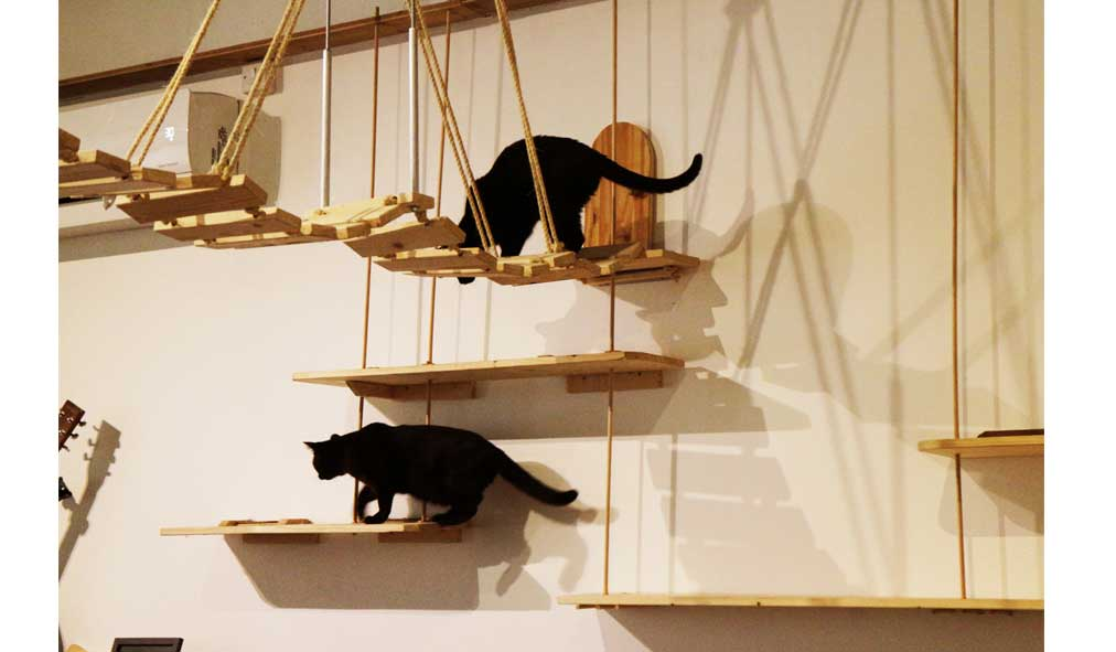 Pause-Cat-Cafe-Apperatus-1