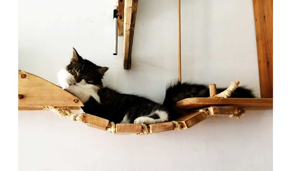 Pause-Cat-Cafe-Cat-Bridge