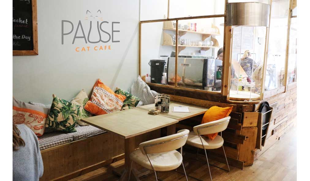 Pause-Cat-Cafe-First-Floor-seating-1
