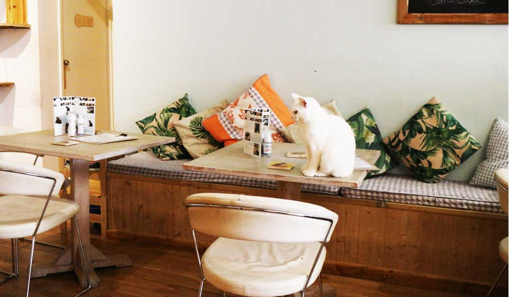 Pause-Cat-Cafe-First-Floor-seating-7