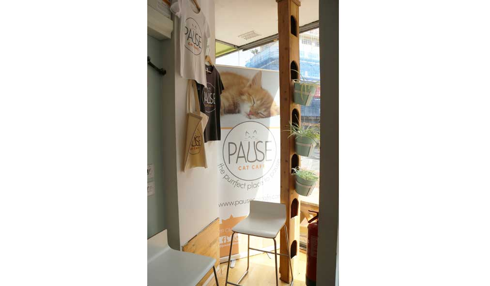 Pause-Cat-Cafe-Window